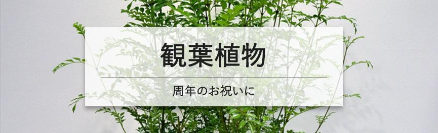 周年祝いの観葉植物|豊橋の花屋Soel Flowers