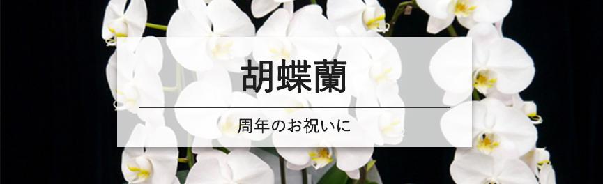 周年祝いの胡蝶蘭|浜松の花屋花風舎