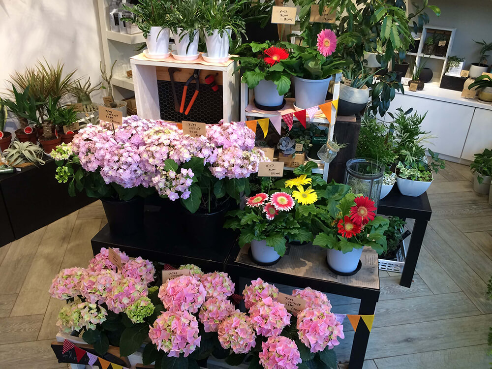 豊橋 Soel Flowers