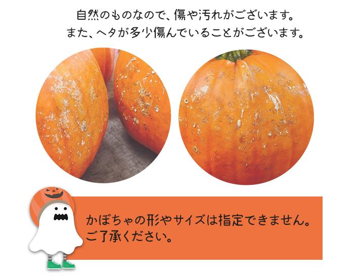 自然のものなのでかぼちゃにはキズや汚れがございます。