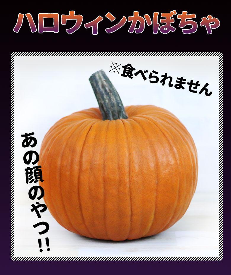 ジャックオーランタンが作れる本物のかぼちゃ