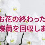 お花の終わった胡蝶蘭回収サービス