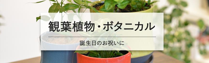 お誕生日祝いの観葉植物・ボタニカル|豊橋の花屋Soel Flowers