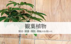 開店祝いの観葉植物|豊橋の花屋Soel Flowers
