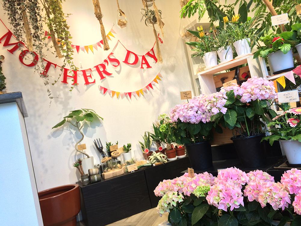 母の日 豊橋 花屋