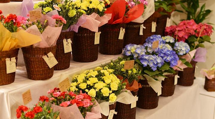 Soelflowers-母の日