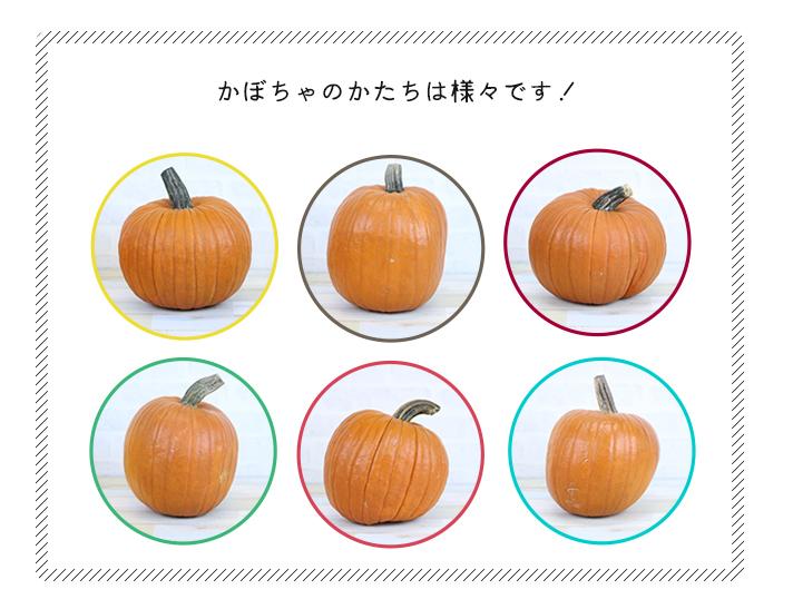 かぼちゃのかたちは様々です