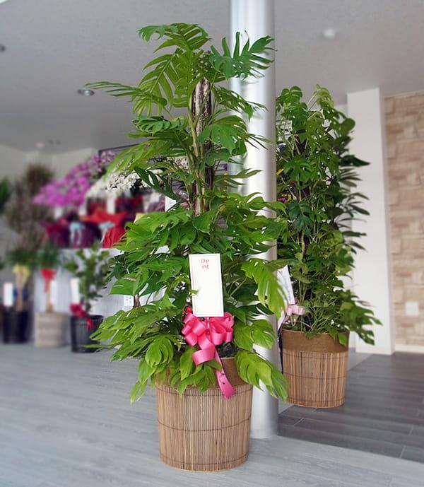 観賞植物名札