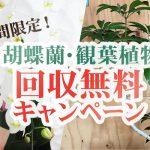 5月31日まで!期間限定!観葉植物・胡蝶蘭回収サービス「無料」