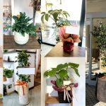 観葉植物の管理方法