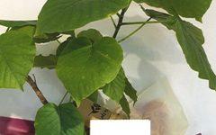 観葉植物|浜松の花屋花風舎